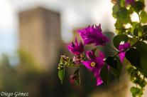 Flor en Granada