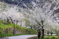La primavera ya está aquí (aunque no lo parezca)