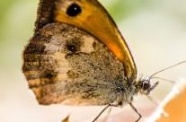 La Rosi de Palma de las mariposas