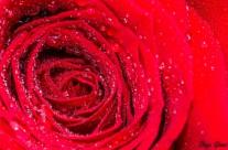 Resaca de San Valentín