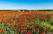 La alfombra roja hasta Sierra Nevada