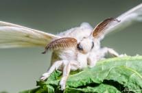 ¿Mariposa o conejo?