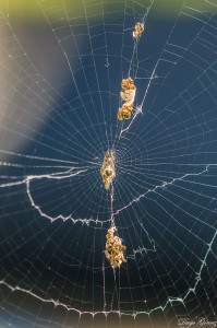 telaraña araña macro tamron 90mm para facebook