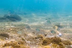 buscando a nemo peces tamron 17-50 fotografía submarina para facebook-2