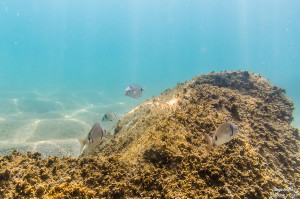 buscando a nemo peces tamron 17-50 fotografía submarina para facebook-3