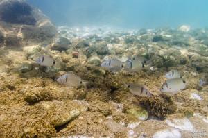 buscando a nemo peces tamron 17-50 fotografía submarina para facebook