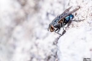 mosca macro tamron 90mm 2.8 para facebook