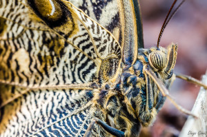 mariposa macro muy macro tamron 90mm para facebook
