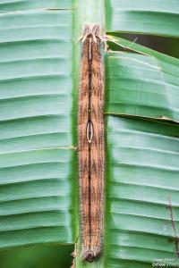 metamorfosis oruga mariposa buho enfoque y foto nikon d750 para facebook