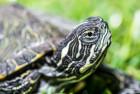 ¡Ojo! con la tortuga