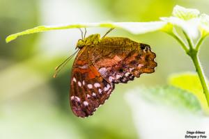 mariposa macro parque de las ciencias enfoque y foto para facebook