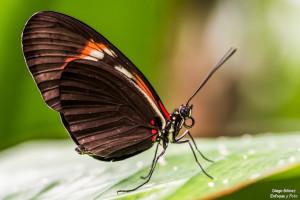 mariposa macro parque de las ciencias granada enfoque y foto para facebook